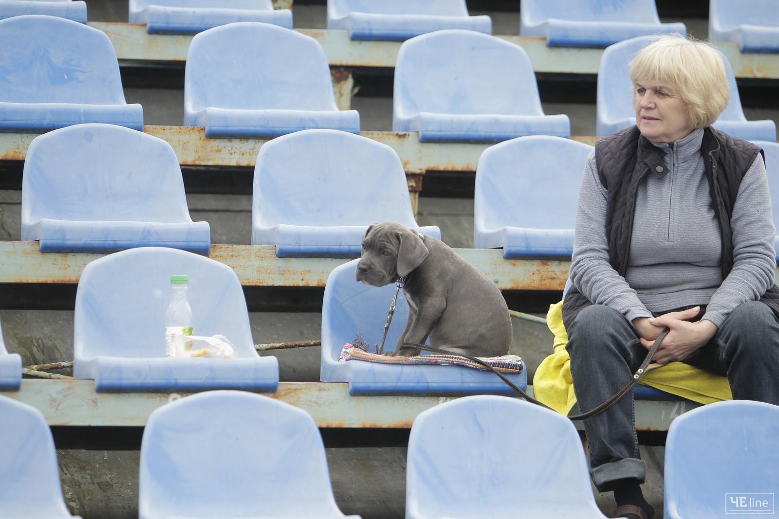Собаче щастя: у Чернігові відбулася виставка собак (Фото)