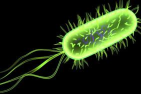 768-e-coli[1]