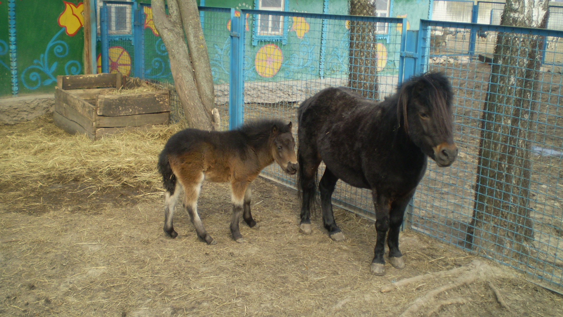 У Менському зоопарку бебі-бум: ведмежата, верблюд, лама, антилопа та поні (Фото)