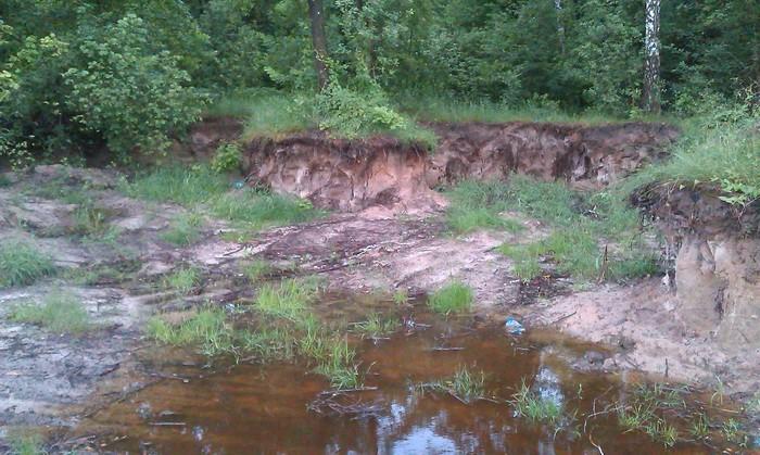СБУ затримала ділків, які незаконно добували ґрунт на ділянках лісового фонду