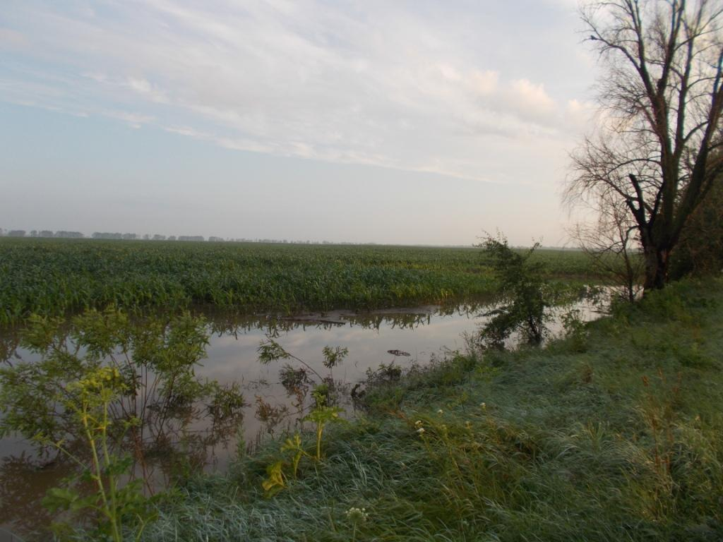 Затоплені будинки та зруйнована дорога: негода пройшлась Чернігівщиною (Фото)