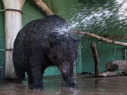 душ для ведмедя