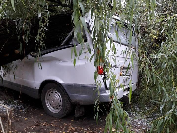 У Чернігові дерево розтрощило автівку (Фото)