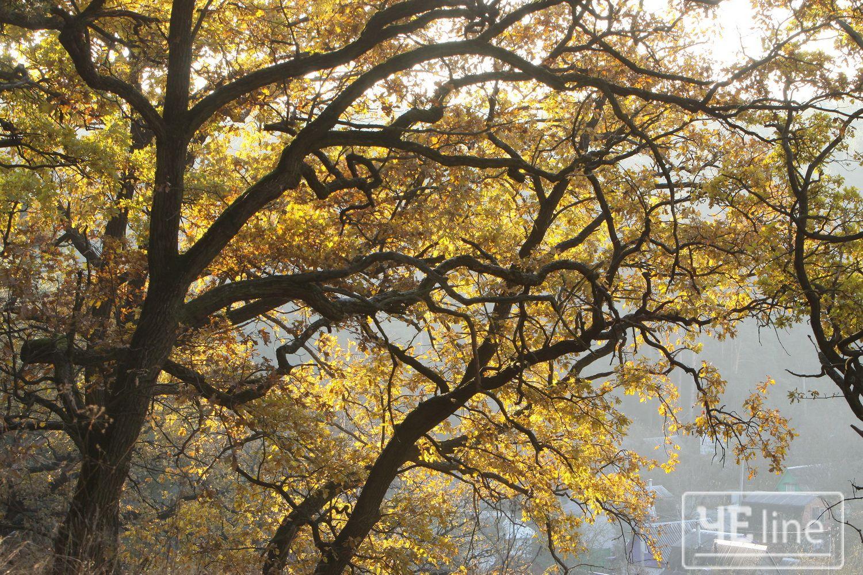 Зима стала на порозі (Фото)