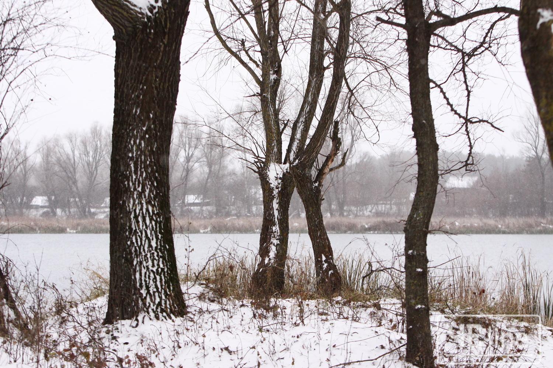 Поезія зими (Фото)