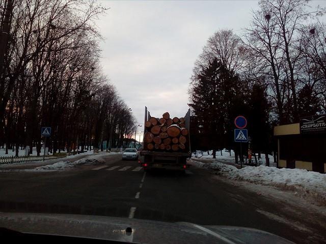 Кочівні дуби переміщаються із Чернігівщини в невідомому напрямку (Фото)