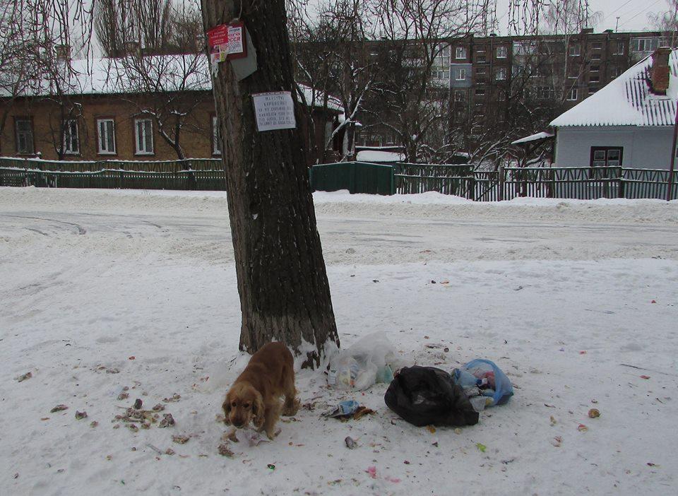 Чернігівців обурює свинство під власними вікнами (Фото)