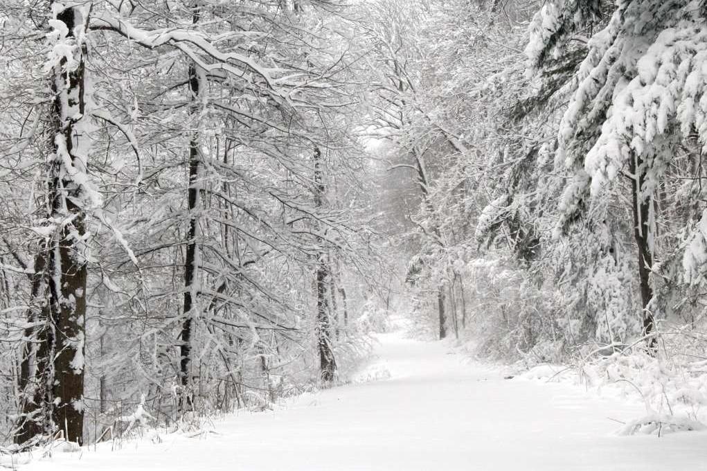derevya-dorogi-elki-pejzazh-priroda-sneg-zima-8184[1]