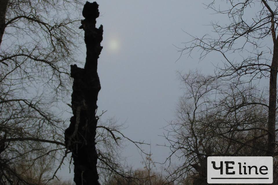 Дерева-монстри Чернігівщини (Фотофакт)