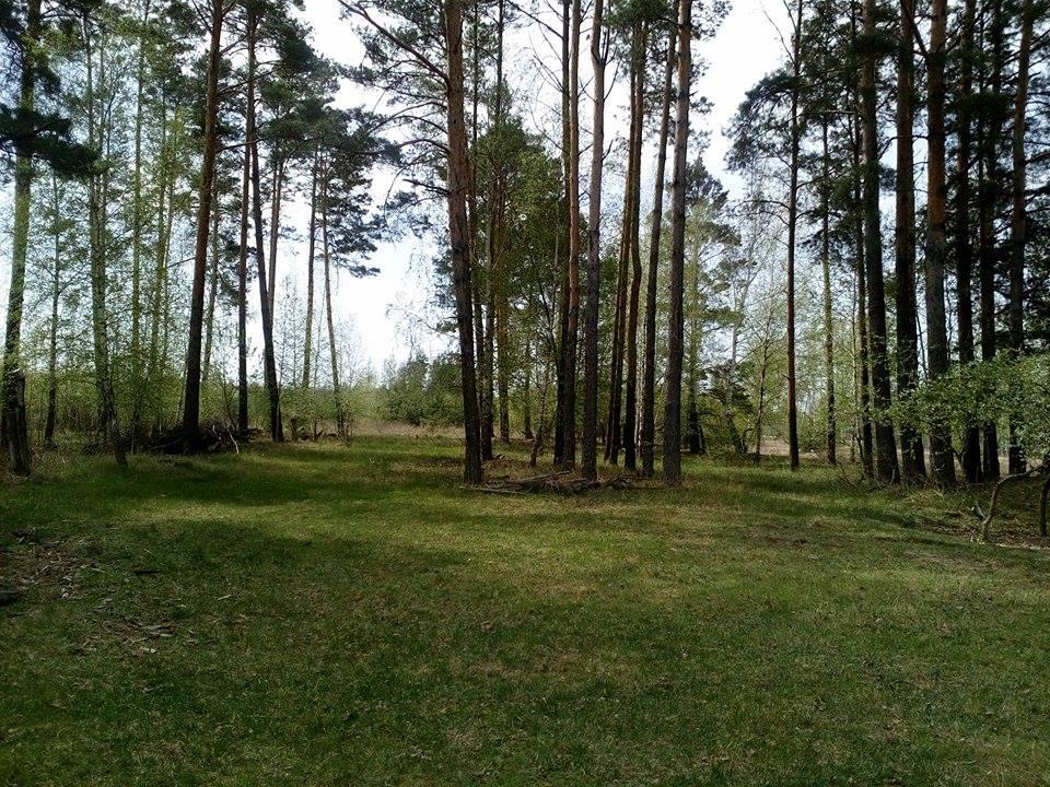 Весняне пробудження природи на Чернігівщині (Фото)