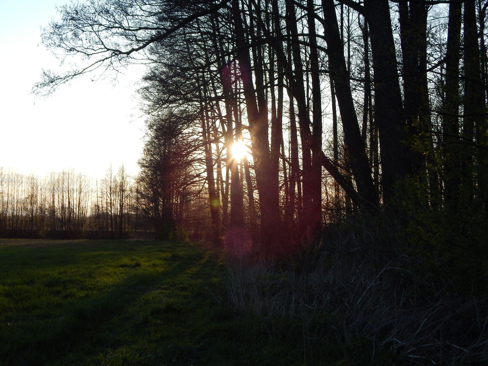 Чернігівщина весняна: неймовірна краса квітня (Фото)