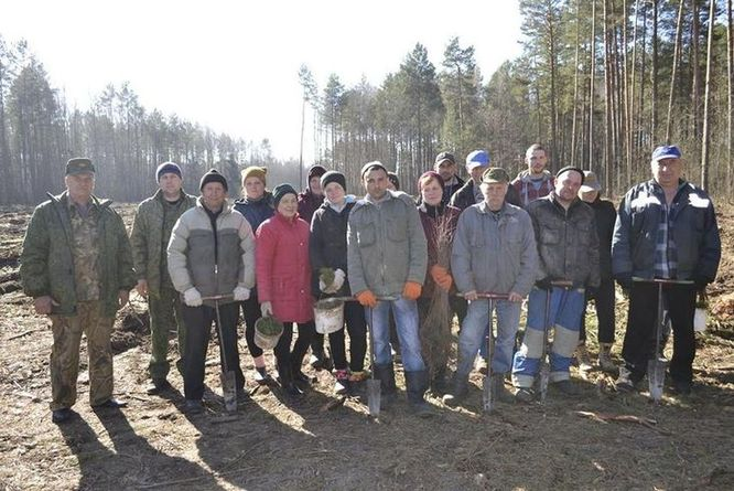На Ріпкинщині безробітні саджали ліс (Фото)