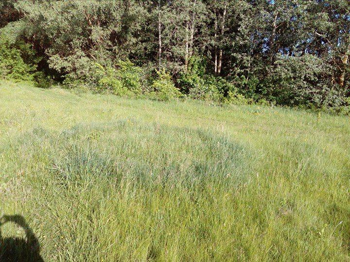 Містичні поля на Чернігівщині (Фотофакт)