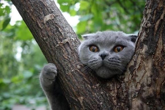 Франківські рятувальники знімали з дерева кота