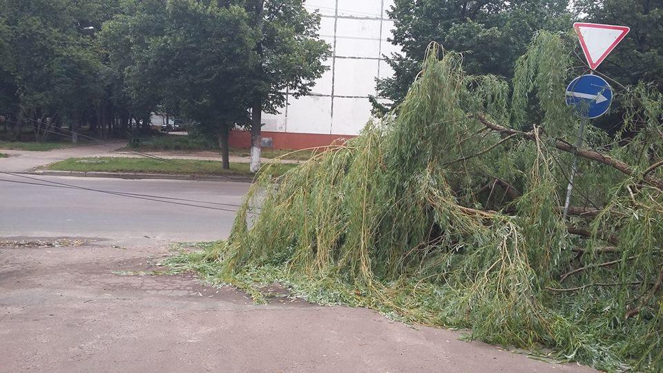 Вітер зніс дерево на Бєлова (Фотофакт)