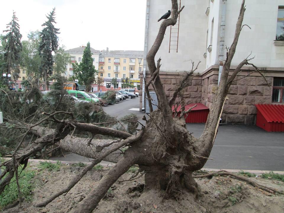 Ялина не витримала реконструкції у сквері імені Хмельницького (Фотофакт)
