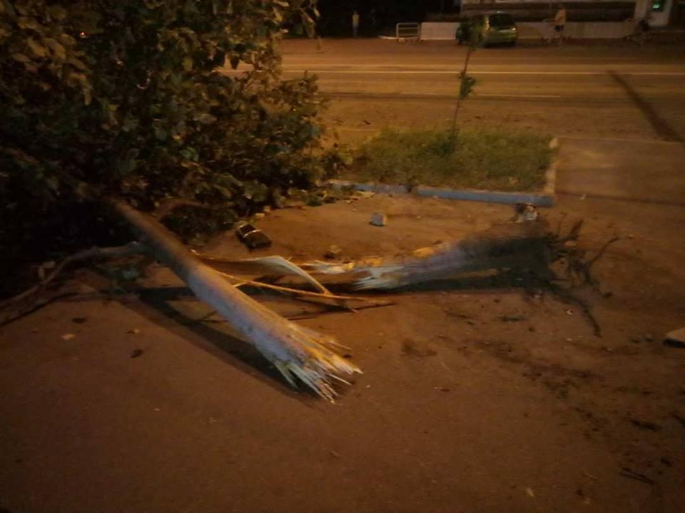 Нічні покатушки: водій зніс дерево на проспекті Перемоги (Фото)