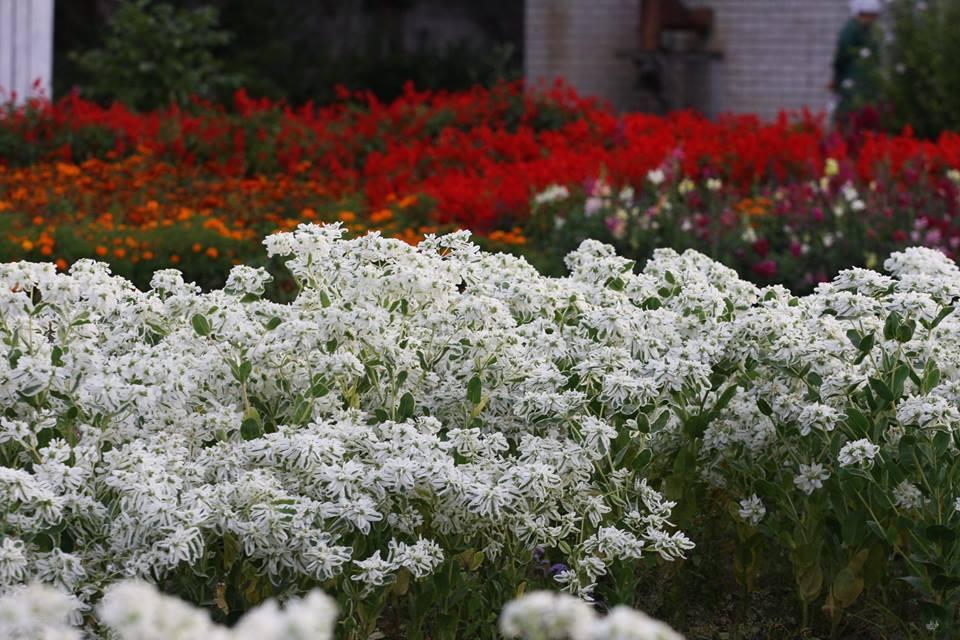 У скільки чернігівцям вилилися вуличні квіти (Фото)