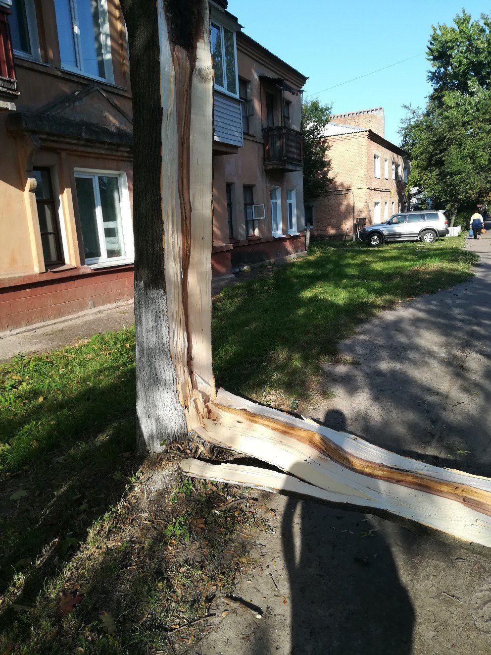 У Чернігові дерево ледь не розчавило чоловіка (Фото)