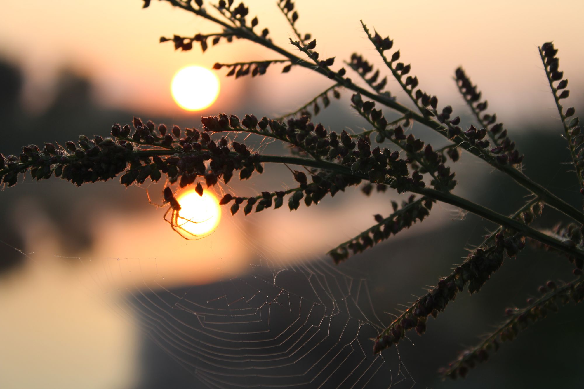 Фантастичний осінній світанок на Бахмаччині (Фото)
