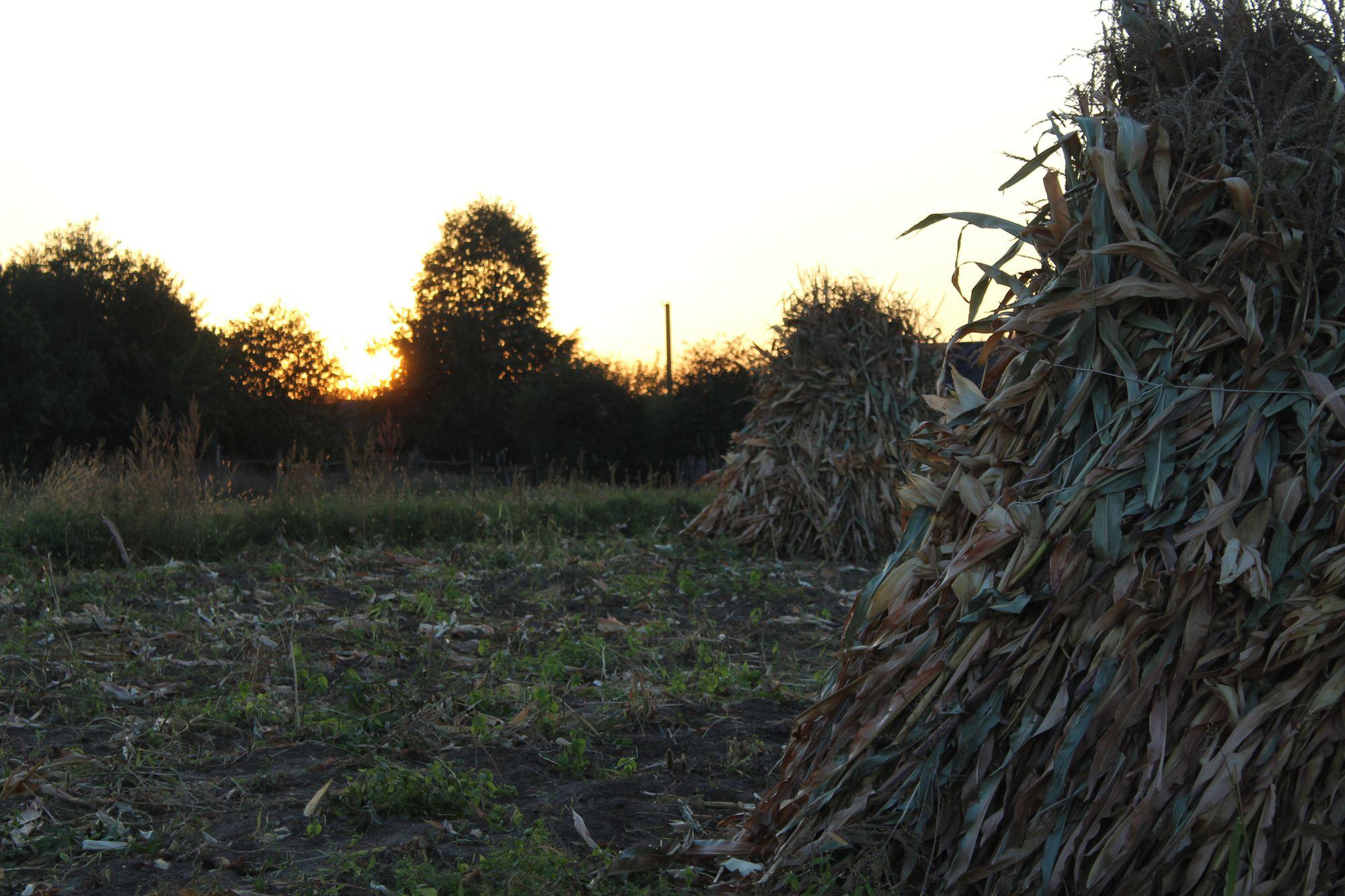 Вражаючий захід сонця у селі перед першими заморозками (Фоторепортаж)