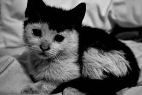 black-and-white-cat-cute-Favim.com-493780