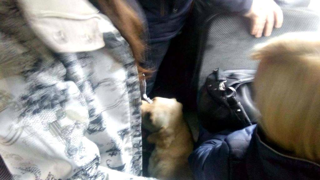Пасажирів маршрутки здивував безпритульний пес (Фото)