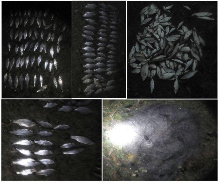 Рибні дні: рибалки-порушники завдали збитків на 17 тисяч гривень (Фото)