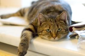 fat-cat-2[1]