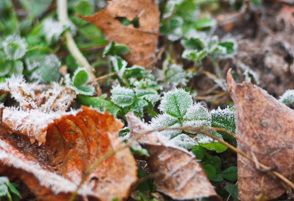 Чернігівщина осіння: ранковий іній (Фото)