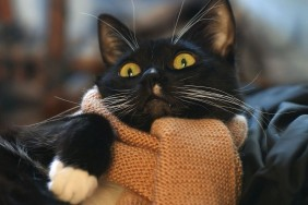 57b19cdab3683-animals---cats-cat-with-a-scarf-067021-_1200[1]