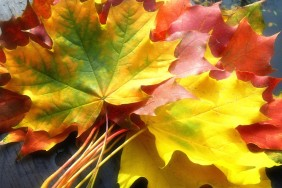 _downloadfiles_wallpapers_1366_768_fall_leaves_wallpaper_autumn_nature_1030