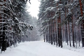 kartinki24_ru_winter_156