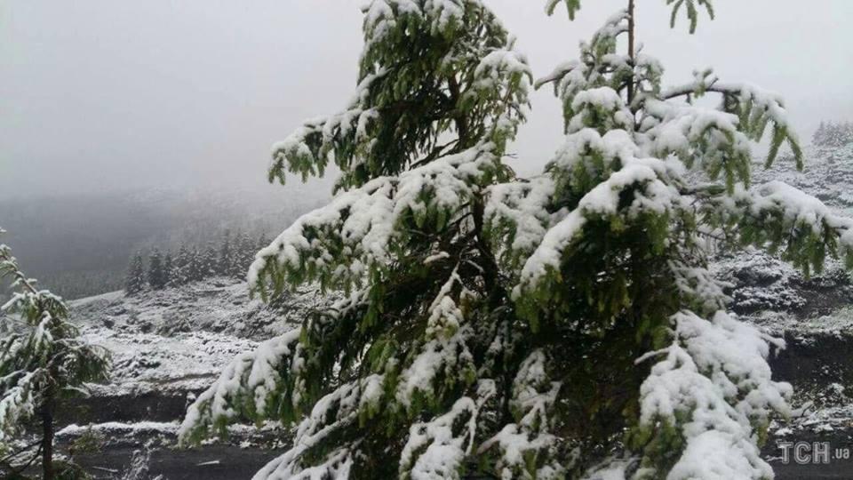 Холодне літо 2018-го: у Карпатах випав сніг (Фото)