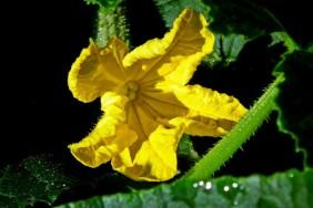 5b5231e163224-flower-3494844-1920_1200