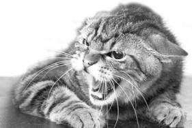 Кіт_сказ_[1]