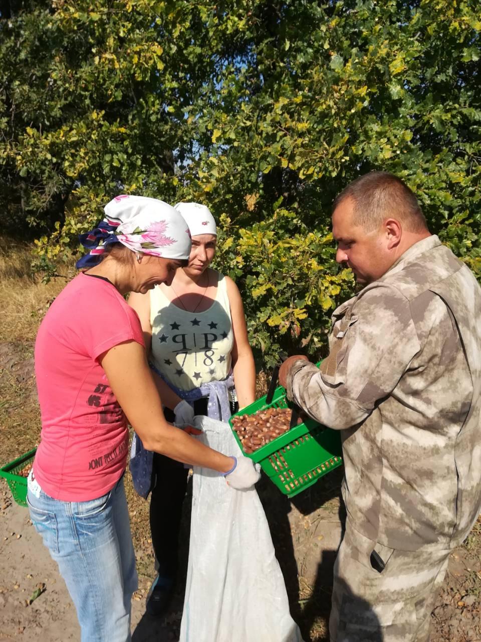 Лісівники очікують небувалого врожаю жолудів