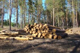 kaluzhanin-navoroval-na-rabote-26-kubicheskih-metrov-drevesiny-82971