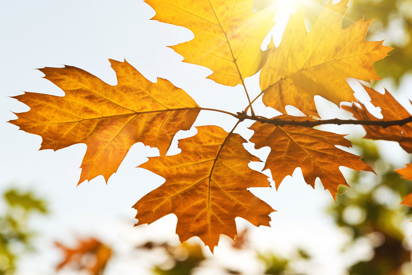 autumn-leaves-in-the-sun-of-light[1]