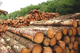 timber-logs-sustainable-forests-wood-houses-management-big
