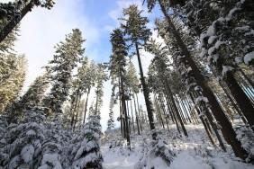 1200px-Tatra_Gebirge,_Wald_bei_Schnee[1]