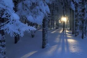 skazochnyi-zimnii-les-photo-atmosfera