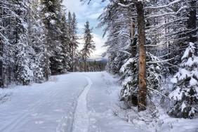zima-les-sneg-1