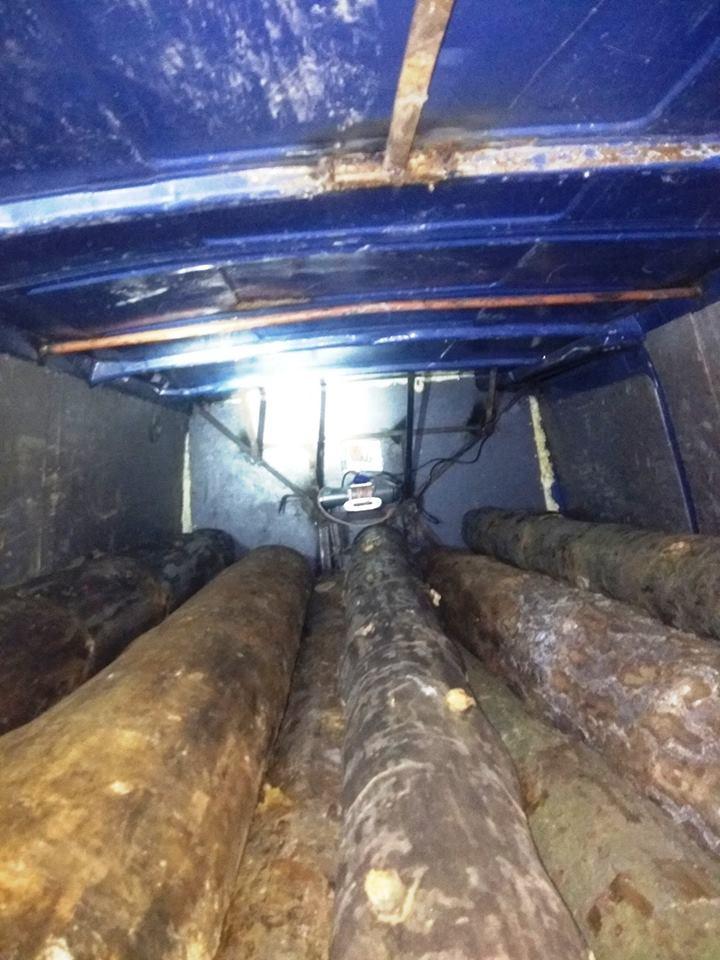 Лісова охорона заскочила «громадських активістів» на крадіжці деревини (Фото)