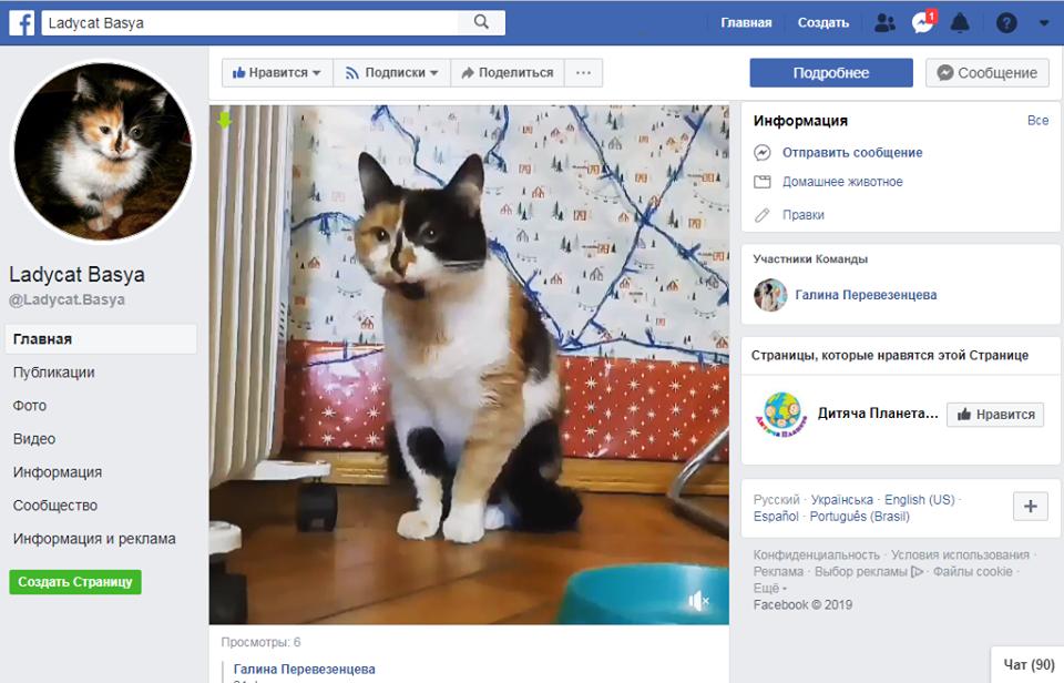 Чотирилапа зірка Інстаграму: кішка-блогер із Чернігова завойовує серця американців (Фото. Відео)