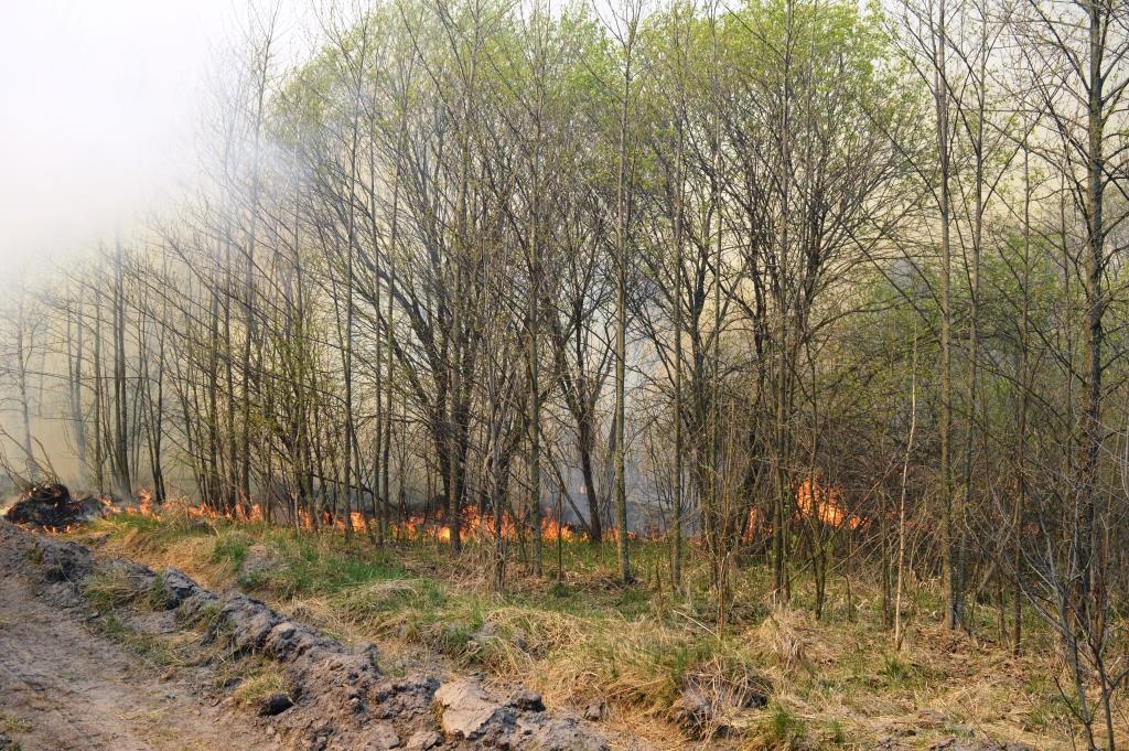 За минулу добу вогнеборці Чернігівщини ліквідували 31 пожежу