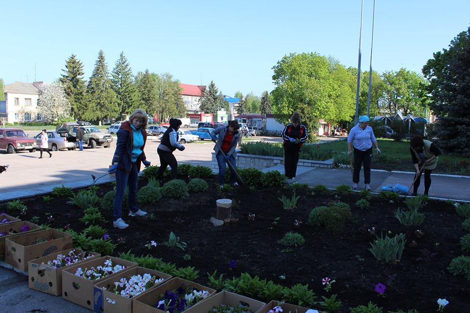 Півтори тисячі квітів прикрасили клумби Козельця (Фото)