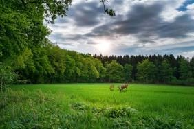 landscape-3426391_960_720