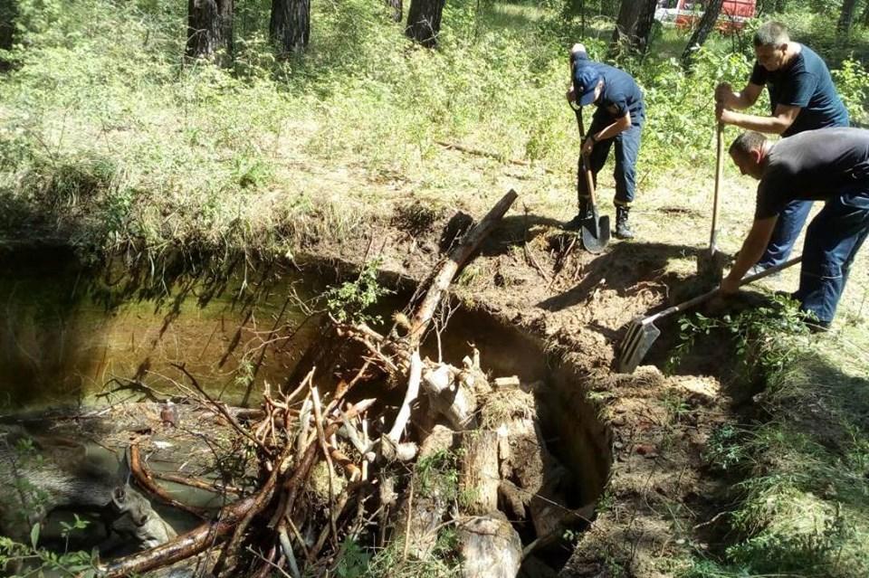 Рятувальники вивільнили з пастки маленьке лосеня (Фото)