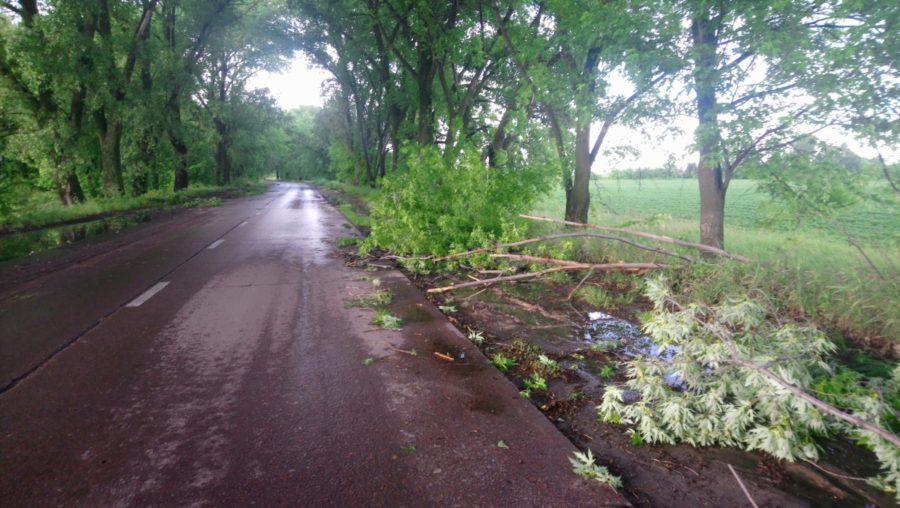 У Ніжині вітер поламав дерева (Фото)